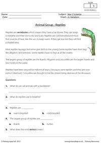 Animal groups - reptiles