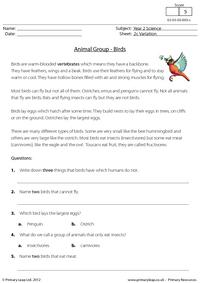 Animal groups - birds