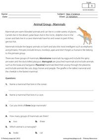 Animal groups - mammals