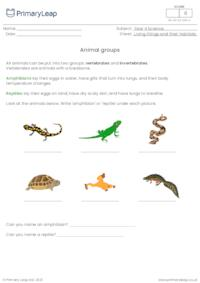 Animal groups 3