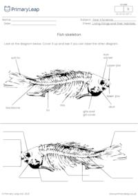Fish skeletons