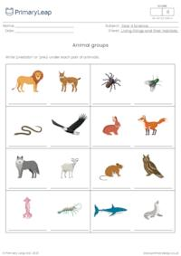Animal groups 4