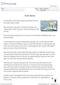 Polar Bears - Text work