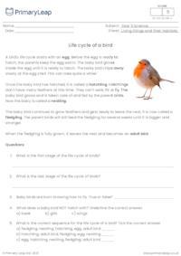 Life cycle of a bird