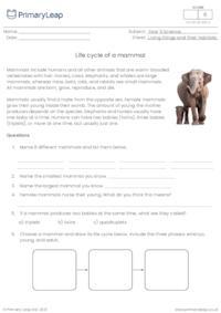 Life cycle of a mammal