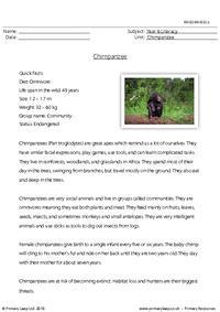 Reading comprehension - Chimpanzee