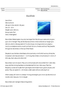Reading comprehension - Blue whale