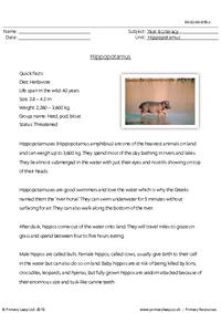 Reading comprehension - Hippopotamus