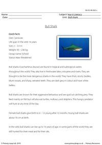Reading comprehension - Bull shark
