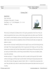 Reading comprehension - Snowy owl