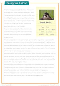Reading Comprehension - Peregrine Falcon