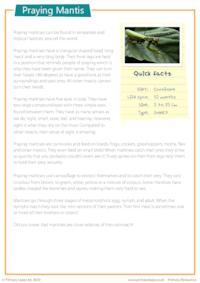 Reading Comprehension - Praying Mantis