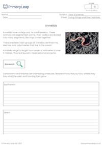 Invertebrates - Annelids