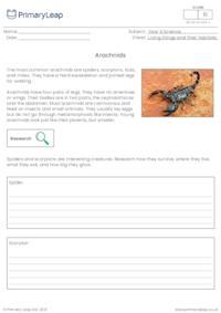 Invertebrates - Arachnids