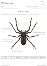 Label the parts of a spider