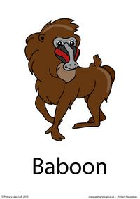 Baboon flashcard