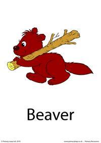Beaver flashcard 2