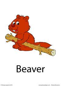 Beaver flashcard 3