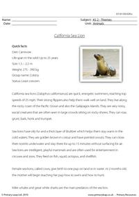 California sea lion comprehension