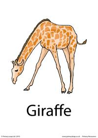 Giraffe flashcard 2