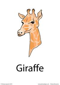 Giraffe flashcard 3