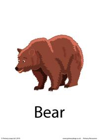 Bear flashcard 1