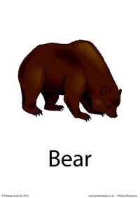 Bear flashcard 2
