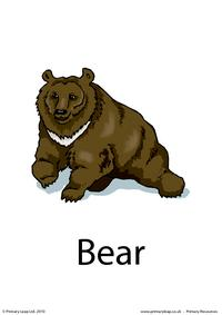Bear flashcard 3