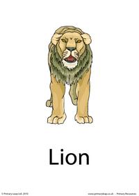 Lion flashcard 1