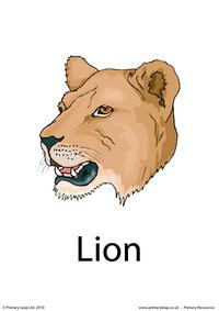 Lion flashcard 2