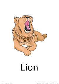 Lion flashcard 3