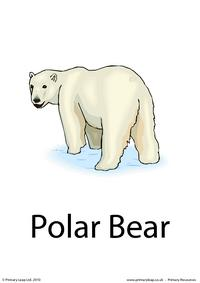 Polar bear flashcard 1