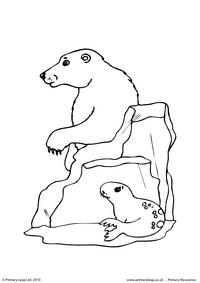 Polar bear colouring page 3