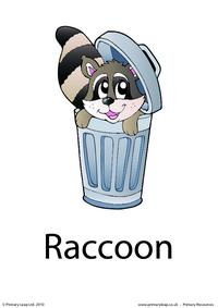 Raccoon flashcard 4