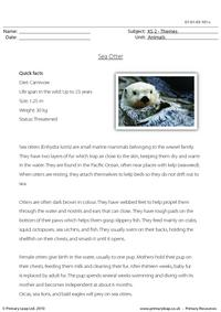 Sea otter comprehension