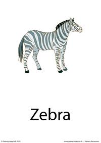 Zebra flashcard 1