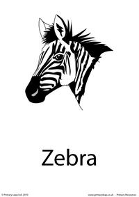Zebra flashcard 2