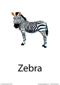 Zebra flashcard 3