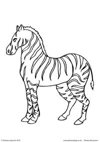 Zebra colouring page