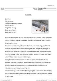 Reading comprehension - Raccoon