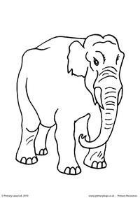 Elephant colouring page 1