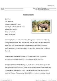 Elephant comprehension
