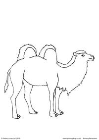 Bactrian camel colouring page