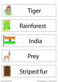 Bengal tiger flashcard - set of 5