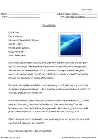 Blue whale comprehension 2