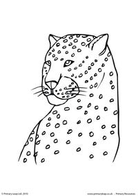 Cheetah colouring page