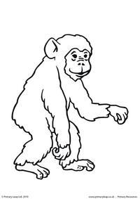 Chimpanzee colouring page 1