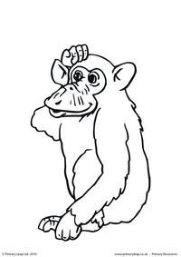 Chimpanzee colouring page 2