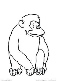Chimpanzee colouring page 3