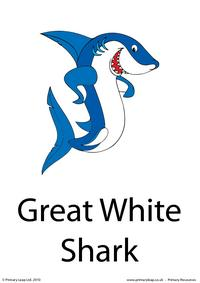 Great white shark flashcard 2